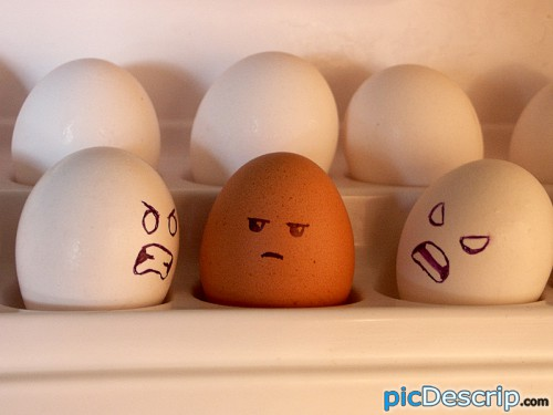 picDescrip.com - Strange - Racist eggs.