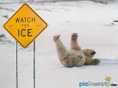 picDescrip.com - Animals - Polar Bear FAIL