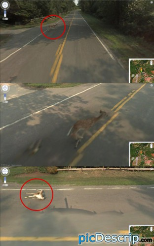 picDescrip.com - Owned! - Not even a deer can stop Google...