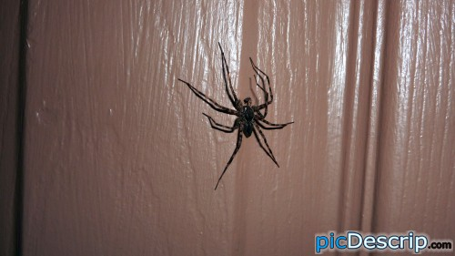 picDescrip.com - Nature - Fucking spider was HUGE!