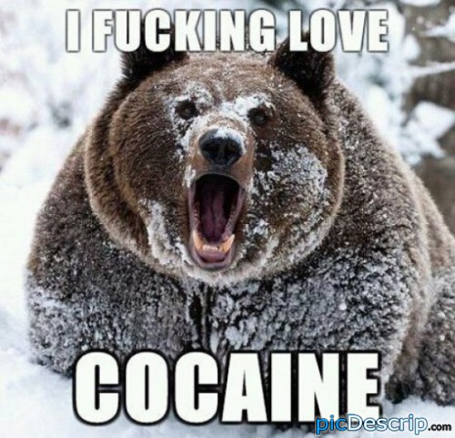 picDescrip.com - Animals - This bear really loves Cocaine.